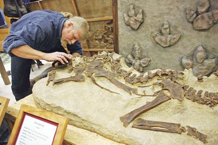 Paleontologists Don T Dig Closing Dino Museum Wyoming