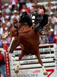 Frontier Days Sundance S Pixley Captures Steer Roping