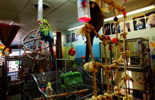 Exotic Bird Store Flourishes In Downtown Casper Casper
