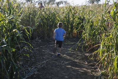Corn Maze (copy)
