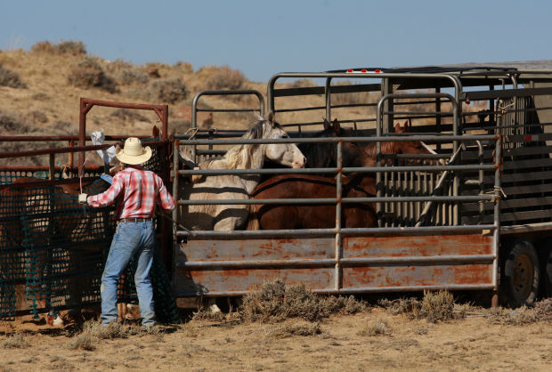 Wild Horse Removal