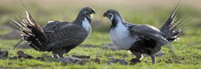 US government weakens application of Endangered Species Act