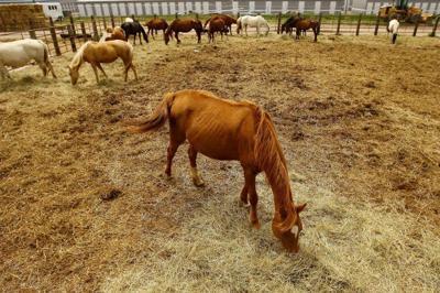 Abused Horses