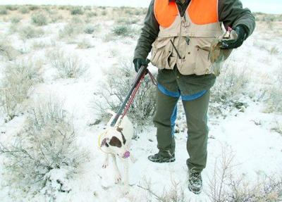 Top dogs: Hunting-dog trials are a blast — for both hunter and dog