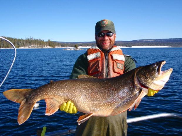 Yellowstone Trout