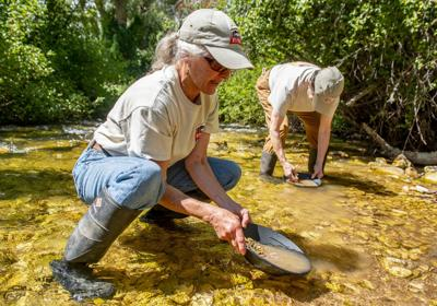 Gold prospectors still panning in Wyoming | Wyoming News