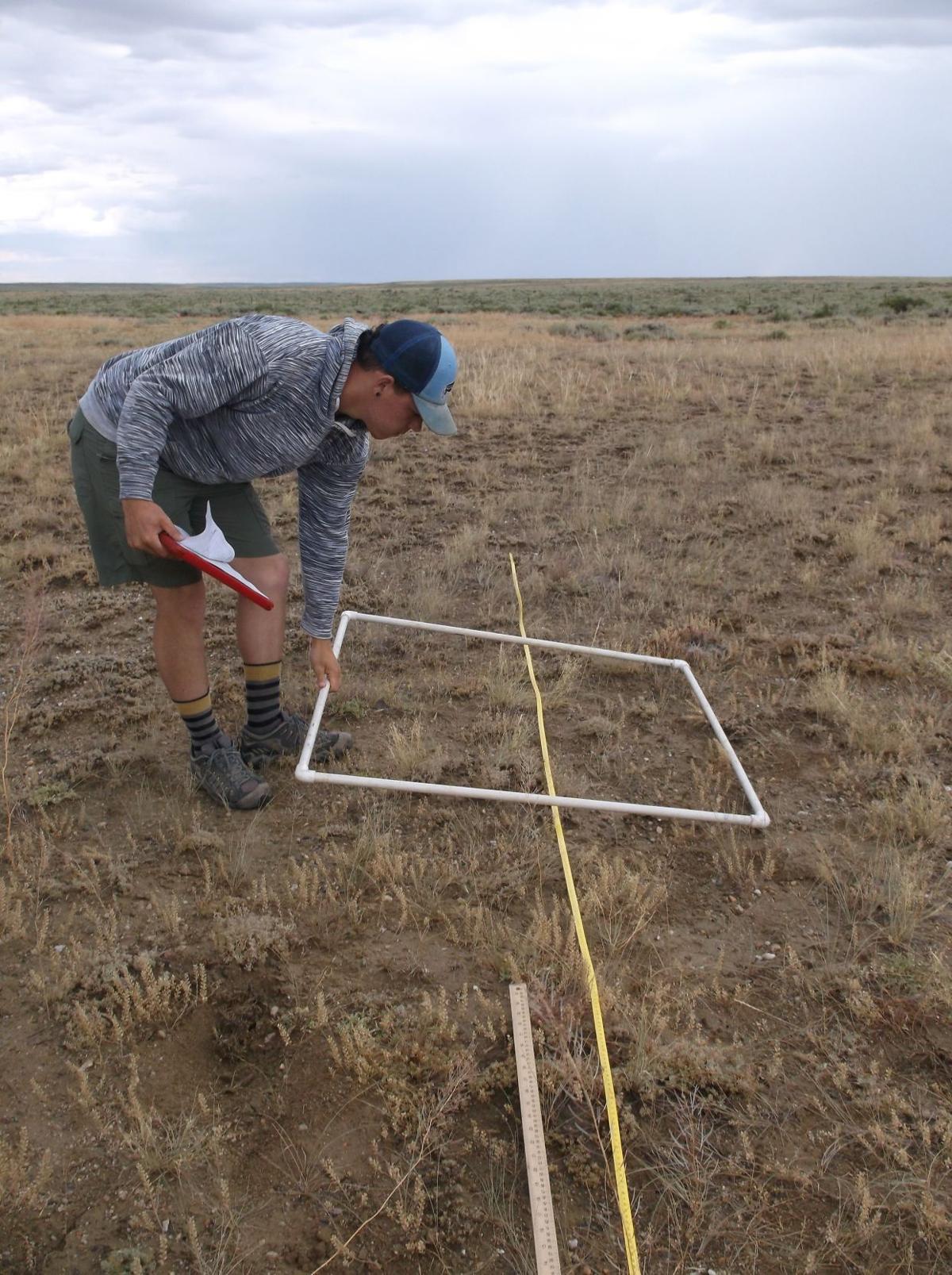 Wyoming pocket gopher