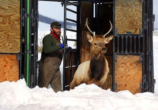 Elk Brucellosis Study (copy)