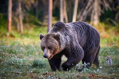Quick thinking, good fortune saves man mauled by grizzlies in Wyoming's Beartooth Mountains