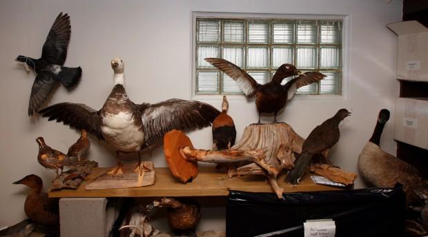 Casper Audubon Center Closes Wyoming News Trib