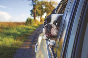 10 best dog-friendly cars, according to CarGurus.