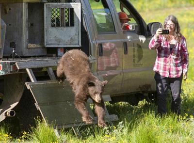 Black bear rescued as cub released back into Wyoming woods