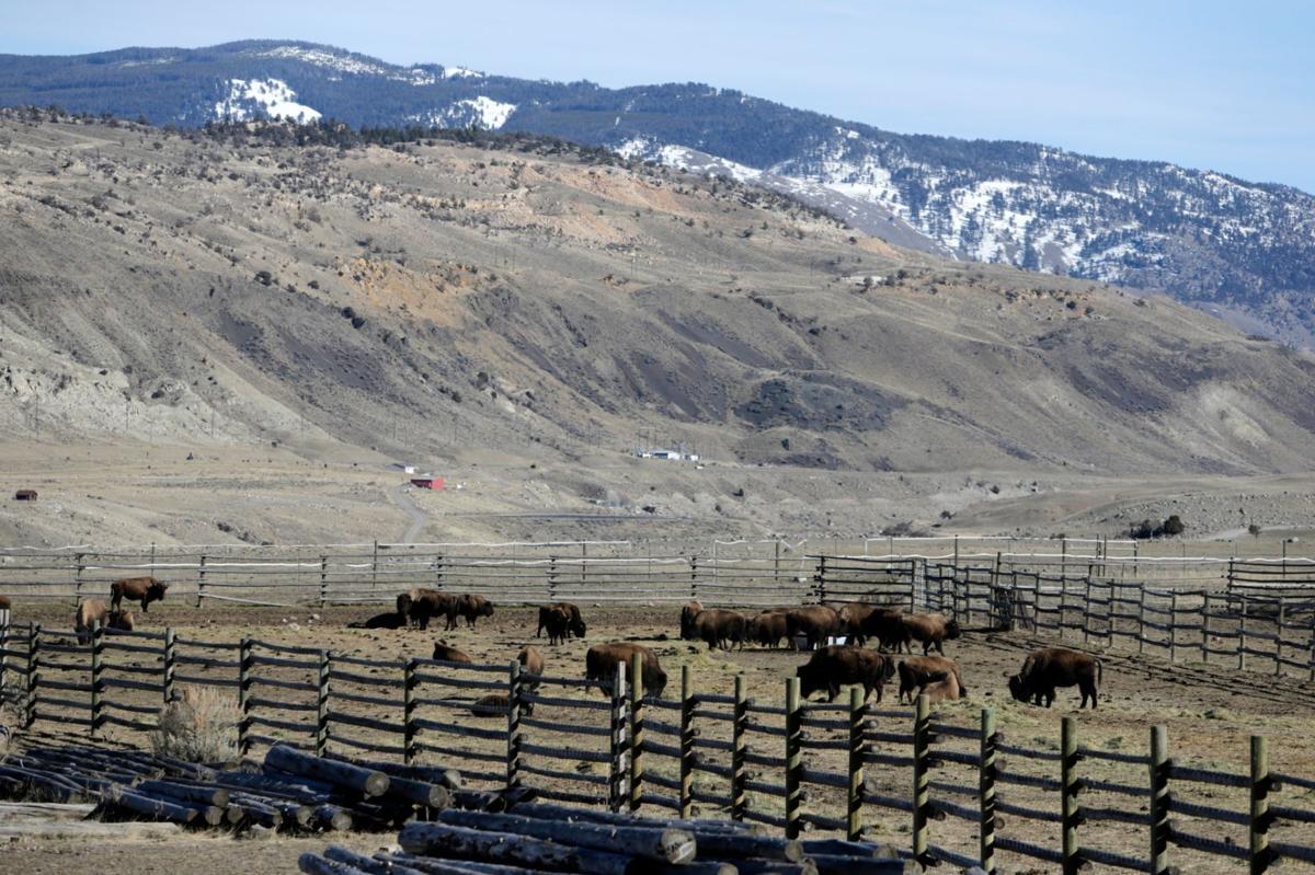 Bison Corral