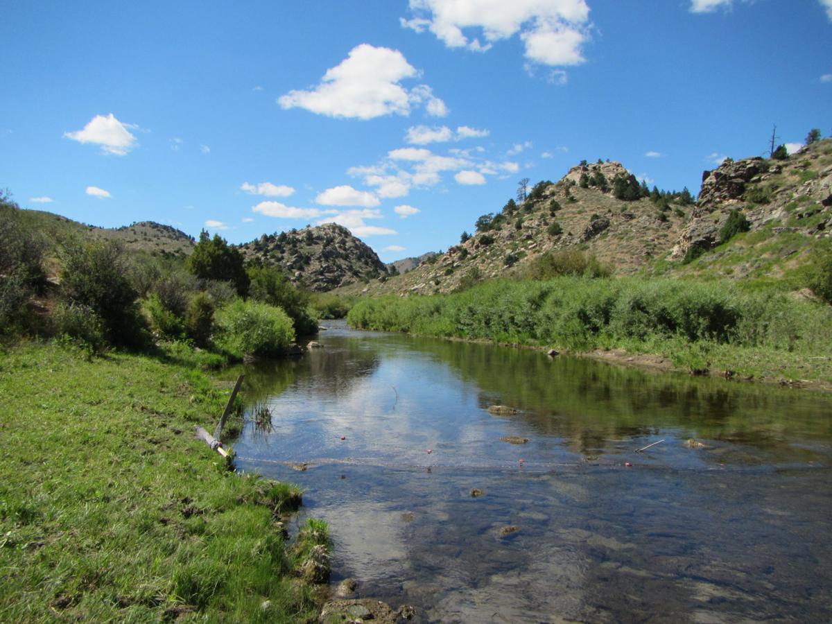 Laramie river chub