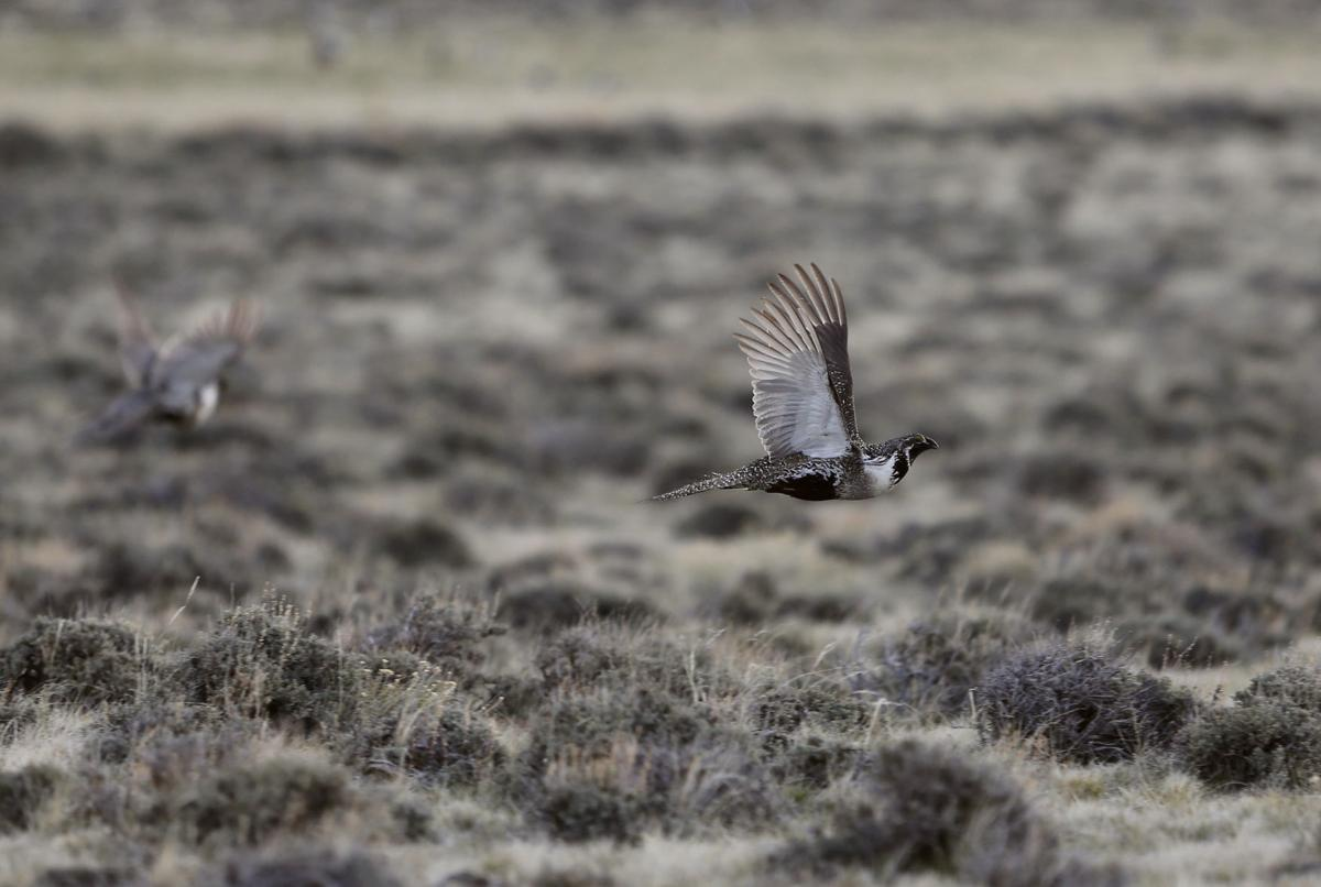 Sage Grouse rule changes
