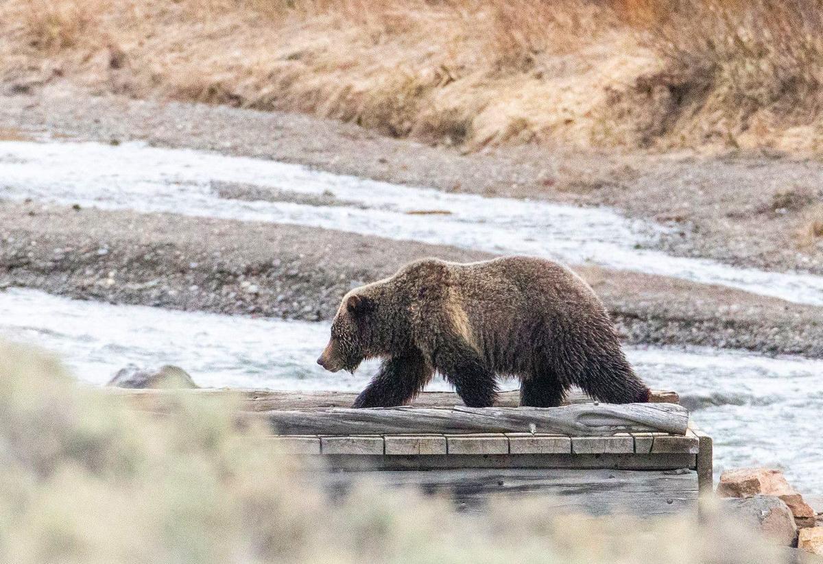 Bear path