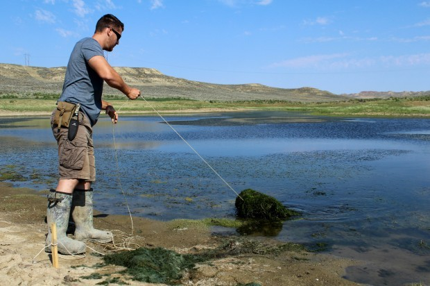 Minnows could help save sage grouse, researchers say | Open