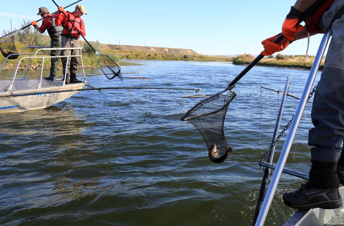 To keep or not to keep wyoming 39 s fishing regulations for Wyoming game and fish regulations