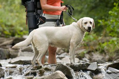 Better Days Ahead:  5 Great Places That You Will Love to Visit With Your Dog (Image)