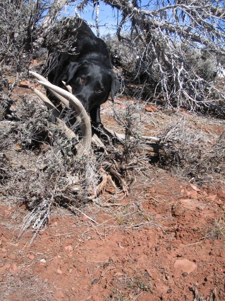 Training A Dog To Find Sheds
