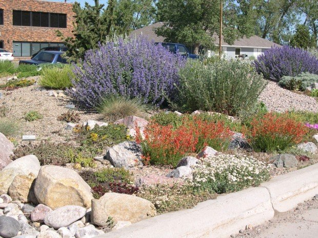 Grow Wyo: Choosing the right plants for Wyoming gardents | Home and