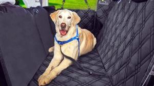5 Best Dog Seat Covers For 2021.