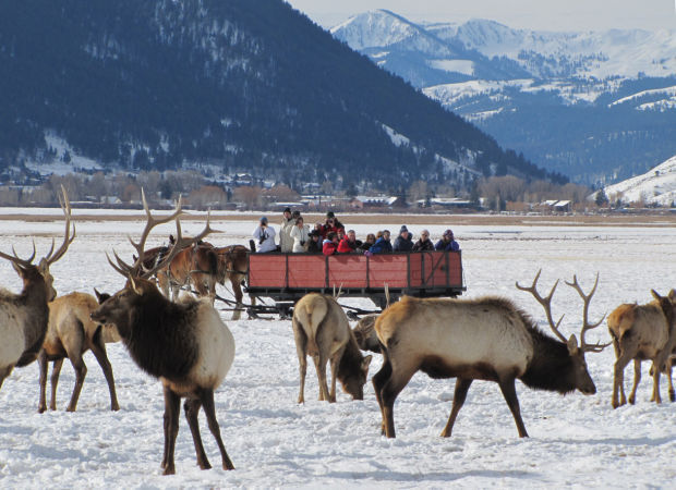Refuge Examines Not Feeding Elk For First Time In Decades