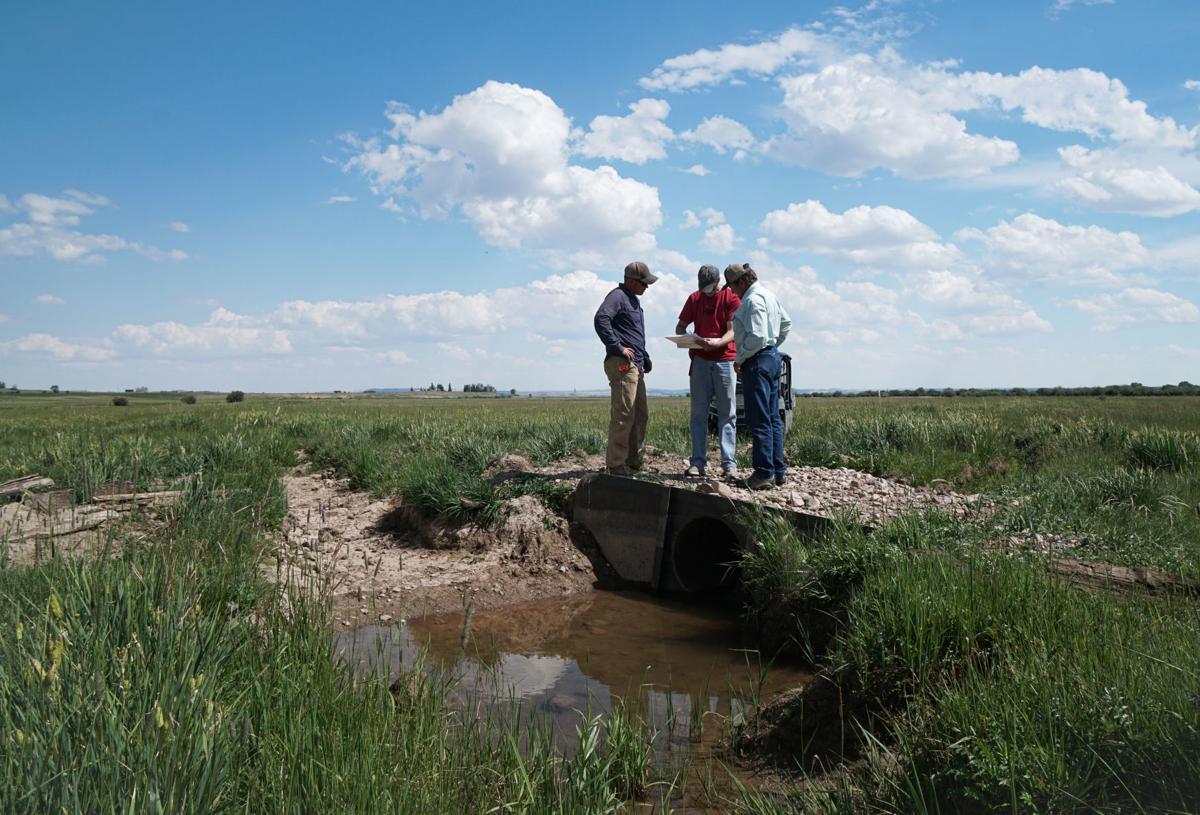 Irrigation experiment