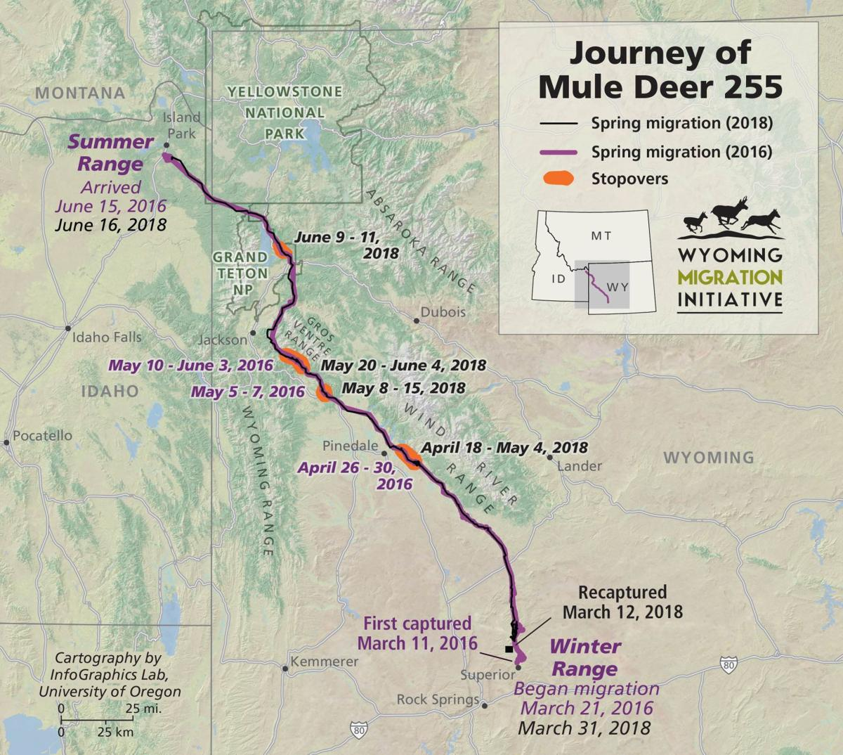 Epic Wyoming mule deer migration documented again confirming the