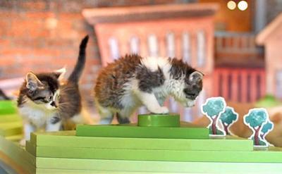 JAHA kittens