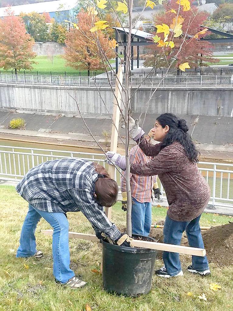 Vision 2025 tree planting