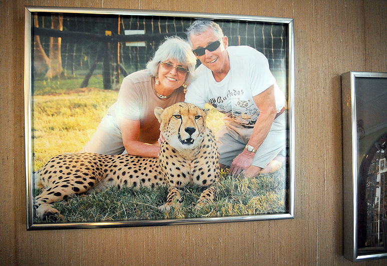 Petersens with cheetah
