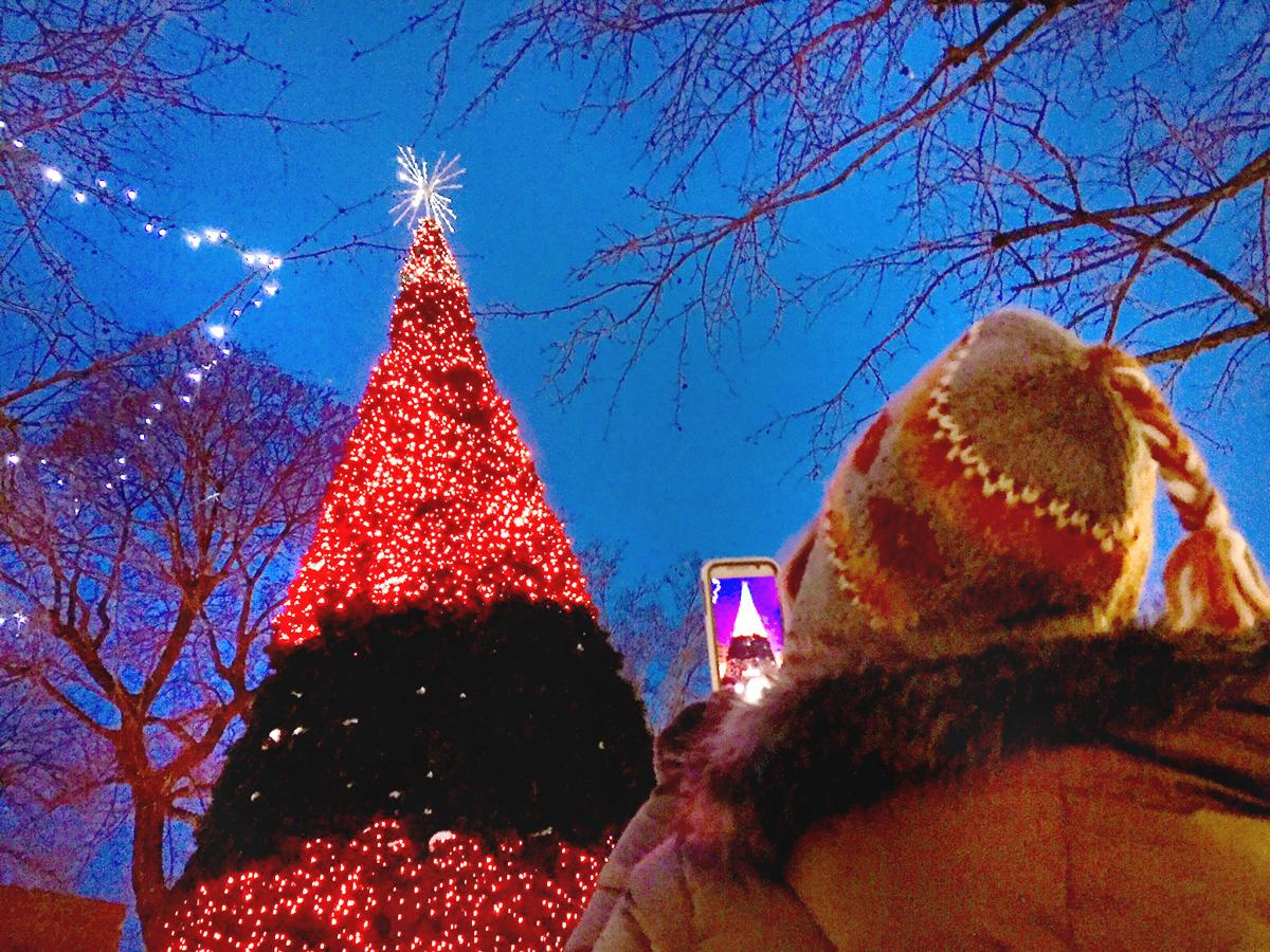 Central Park Christmas tree goes dark after 'wonderful ...