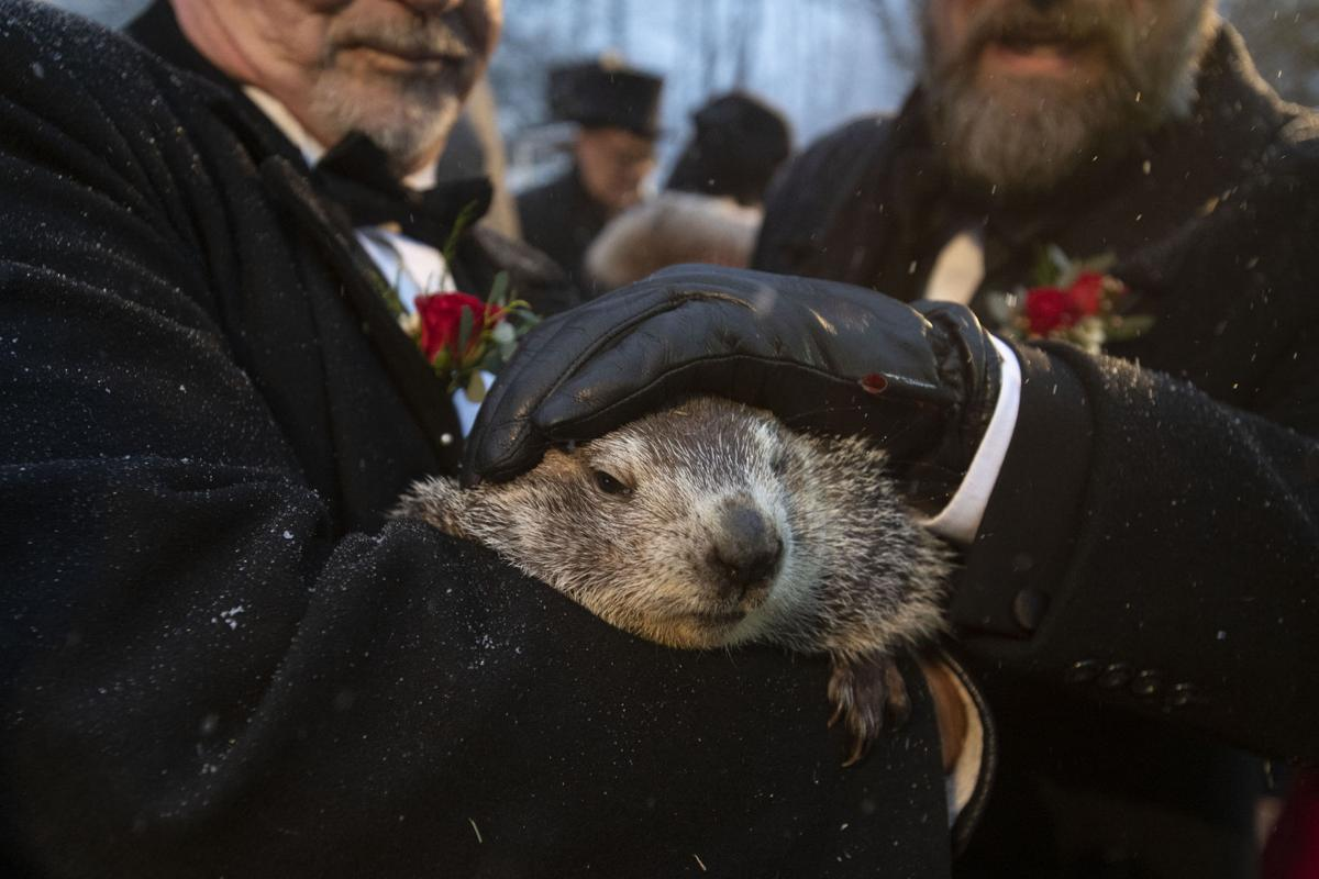groundhog day 2020 results