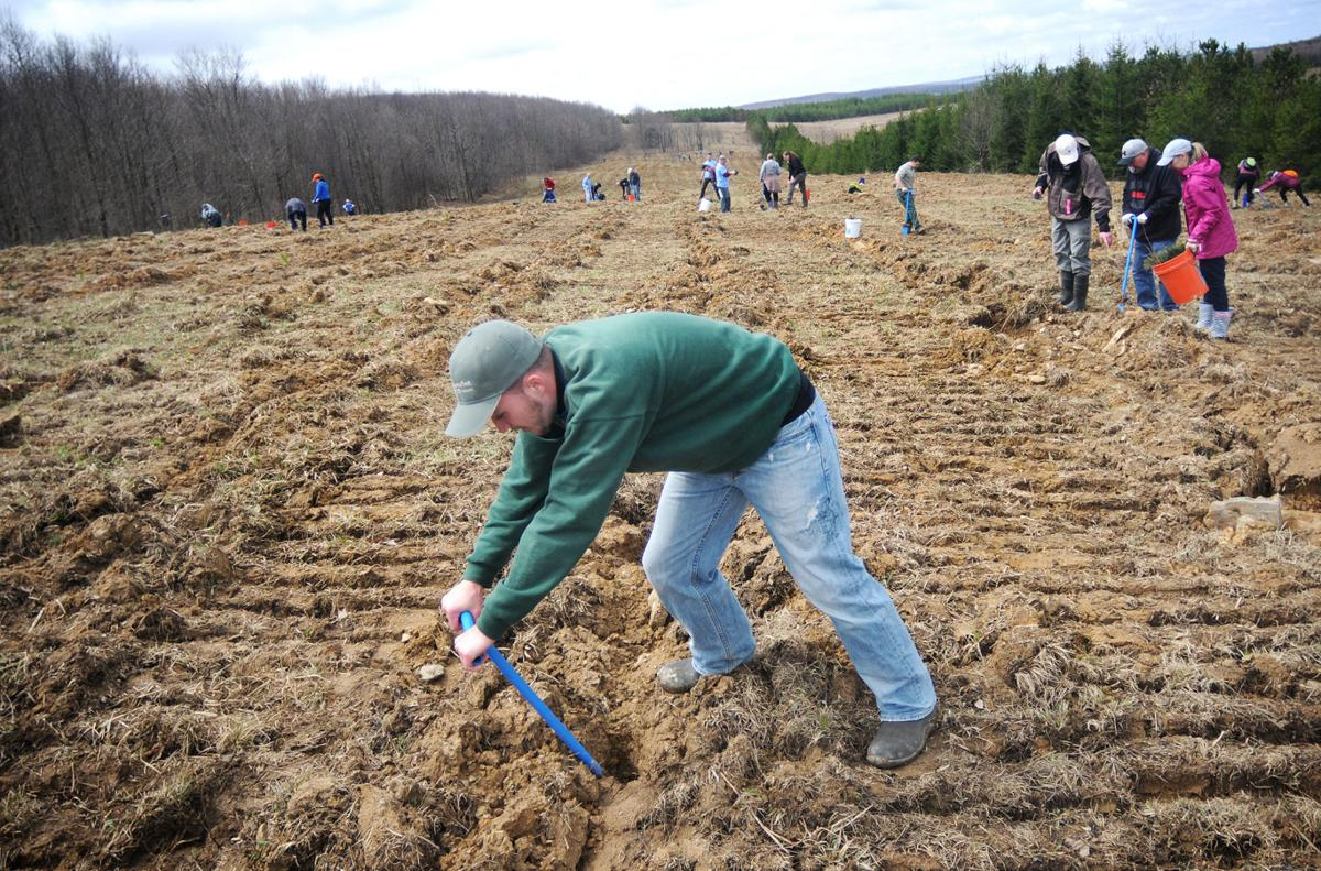 Volunteers gather to plant trees at Flight 93 National Memorial ...