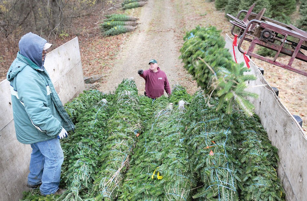 Christmas Tree Producers Part - 50: Trees 16