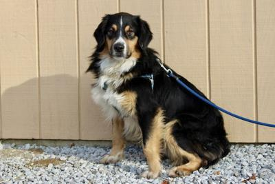 Paw Prints: Growing trend: Hospice care for pets