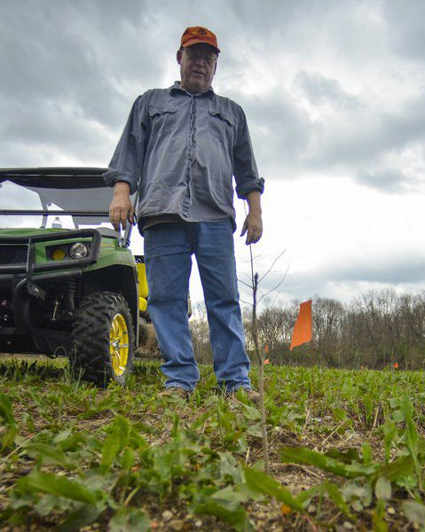 Mark Bennett: Farmers, conservation group return bottomlands to natural state