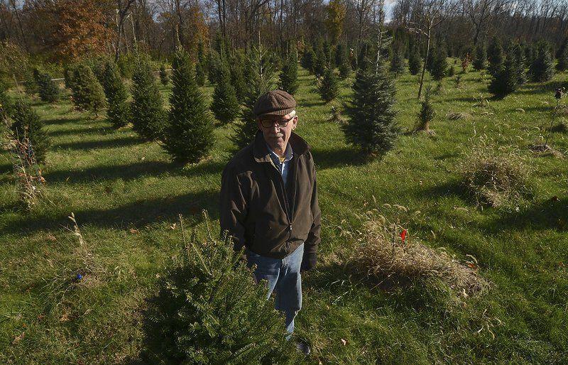 memories tradition drive sales of live christmas trees - Live Christmas Tree