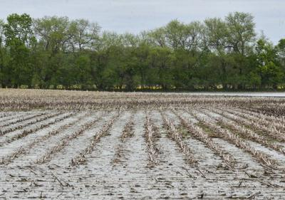 Farmers need relief from rain