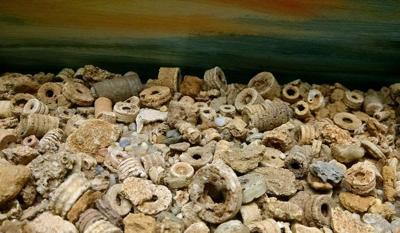 Wabash Valley fossils: Crinoids