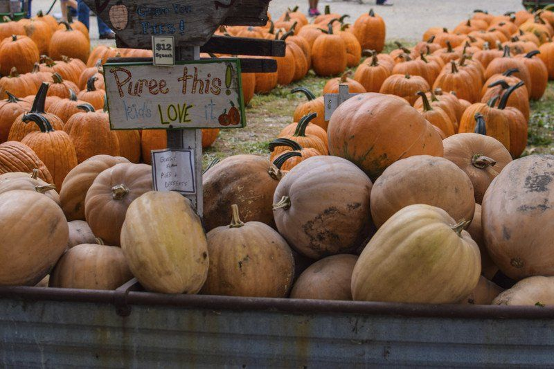 pumpkin patch arcola illinois