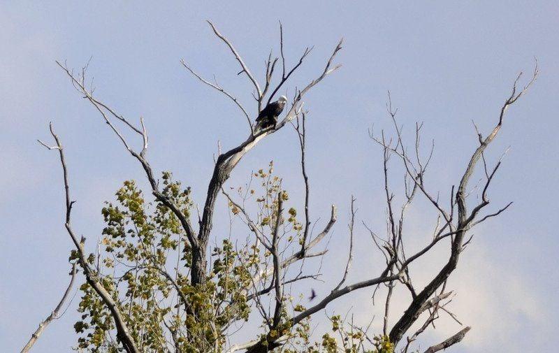 wildlife in indiana