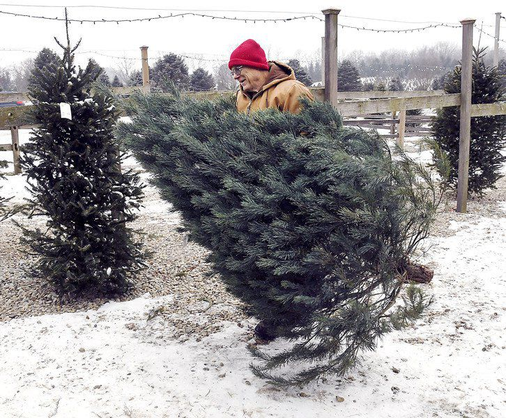 oh christmas sneeze trees bring allergens whether real or fake