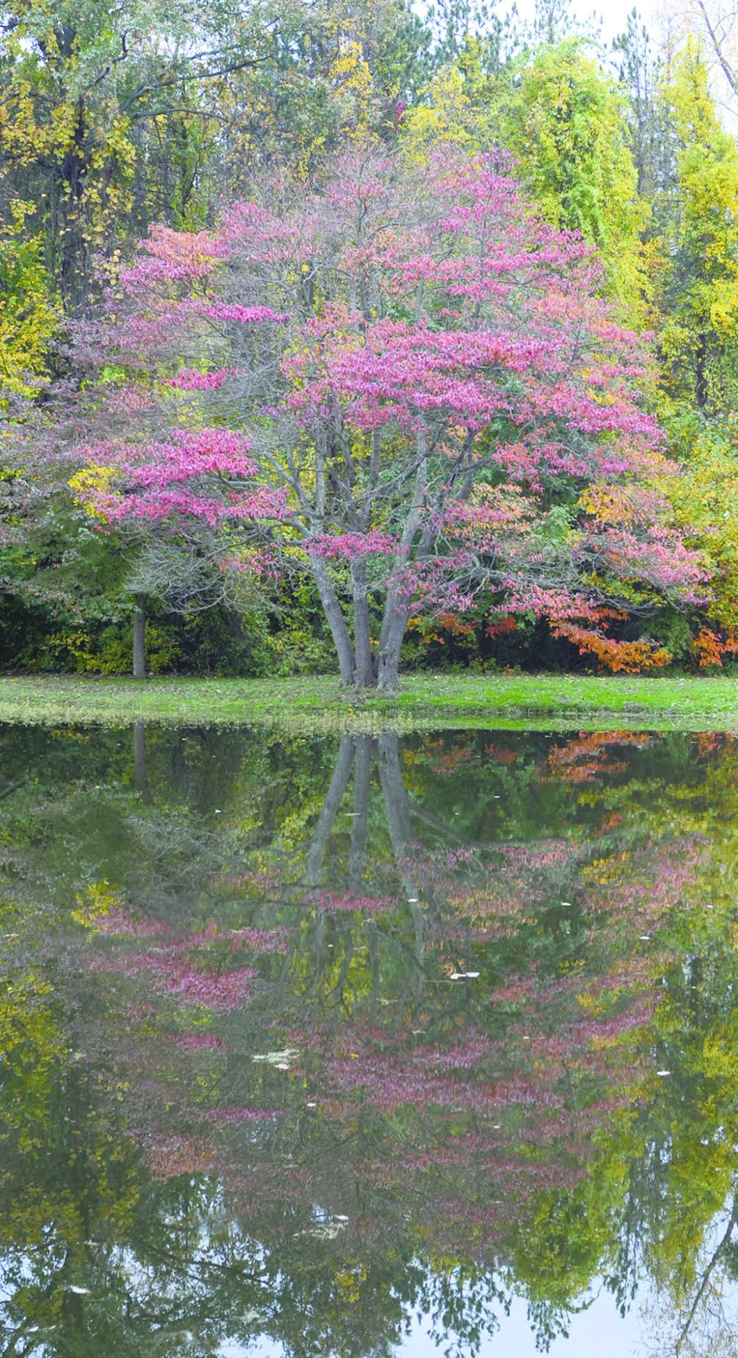 Spread some color: Upload your fall foliage pictures | Features ...