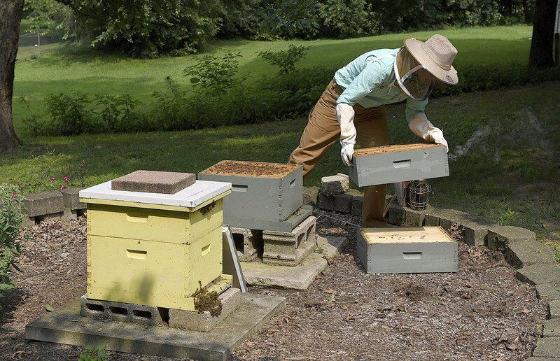 Thank-a-Farmer: Honey, bee farming — it's pretty sweet