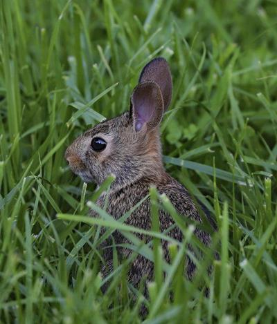 The Off Season: Among other things, it's the year of the rabbit