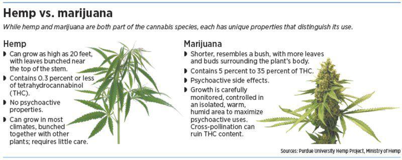 Marijuana's sober cousin has agricultural benefits