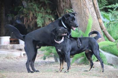 Wayward Dogs