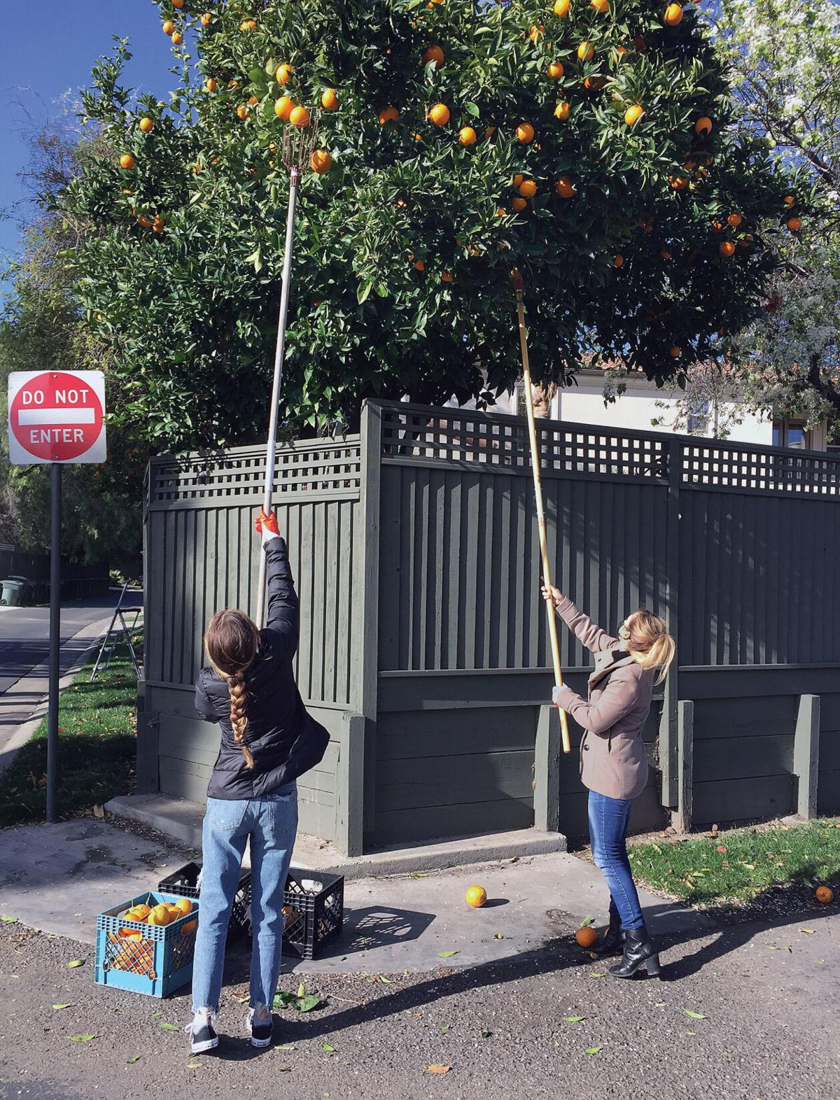 Youths collects oranges for charity